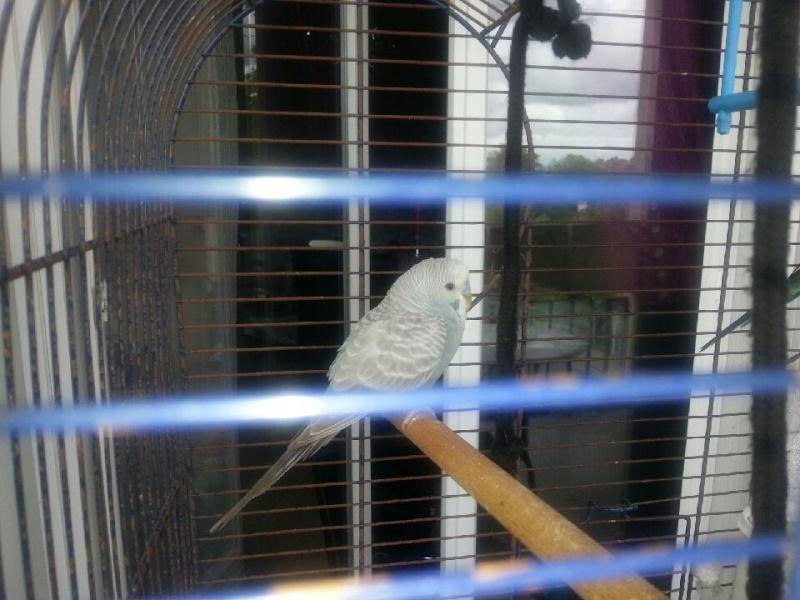 cage faite maison ou leboncoin Downlo11