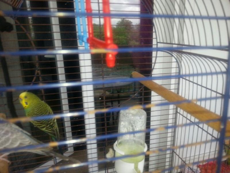 cage faite maison ou leboncoin Downlo12