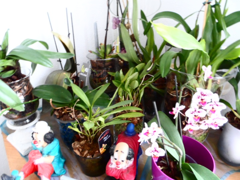 Orchidee in Glasvase 2 - Seite 24 Sam_4010