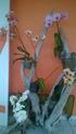 Orchidées et terrasse Wp_20140