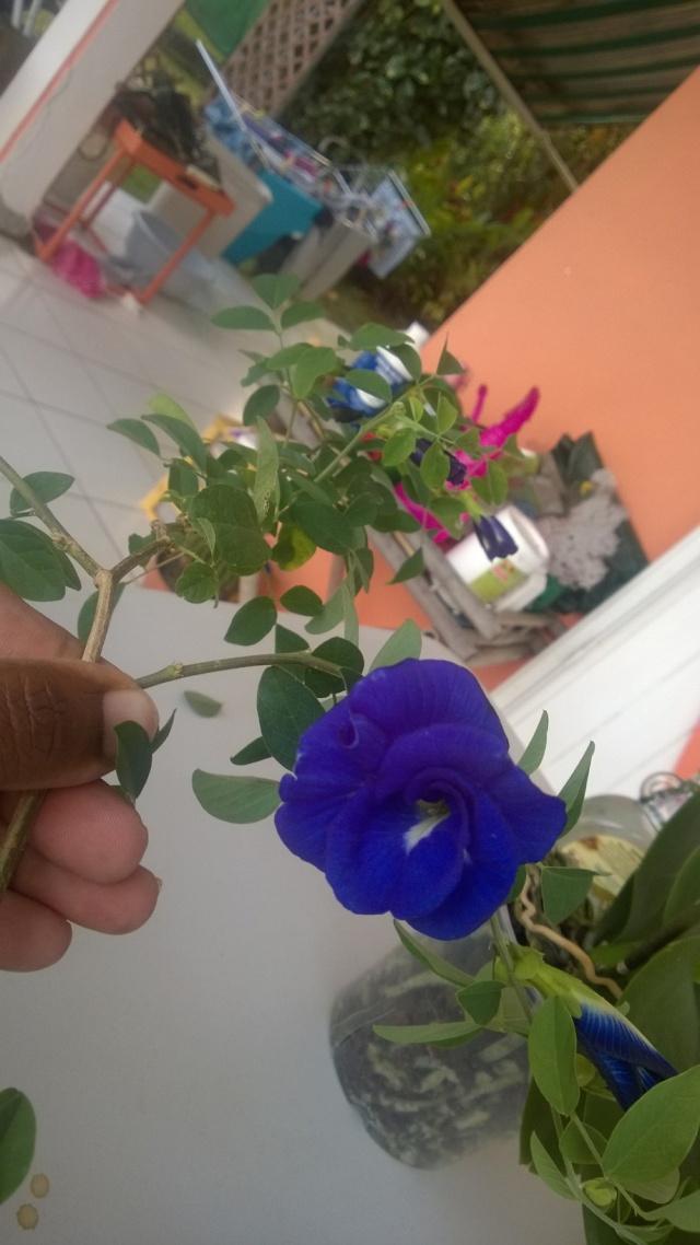 Mes hoyas Wp_20128