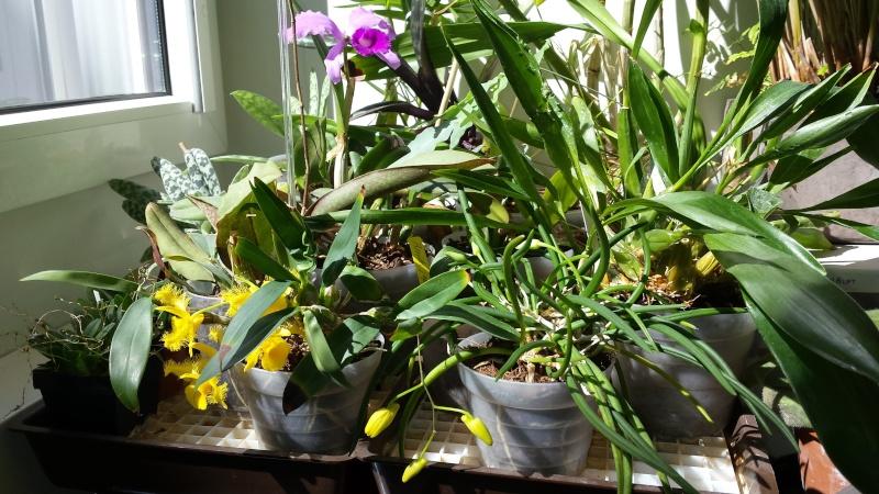 Büroorchideen Fenste10