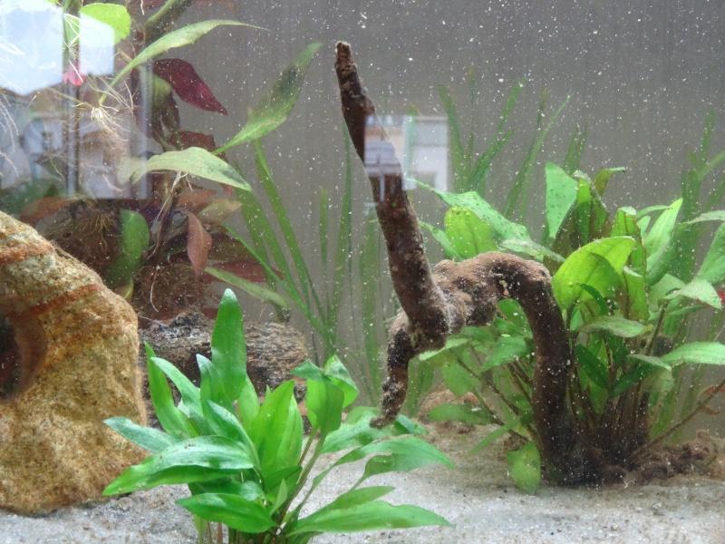 Notre premier aquarium - Page 3 Dsc01713