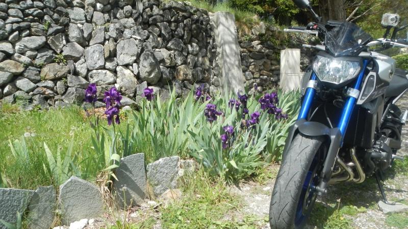 Race Blu fleur bleue  Dscn2316
