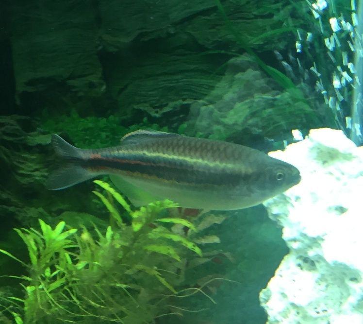 Quel est ce poisson ?  Gros_d11