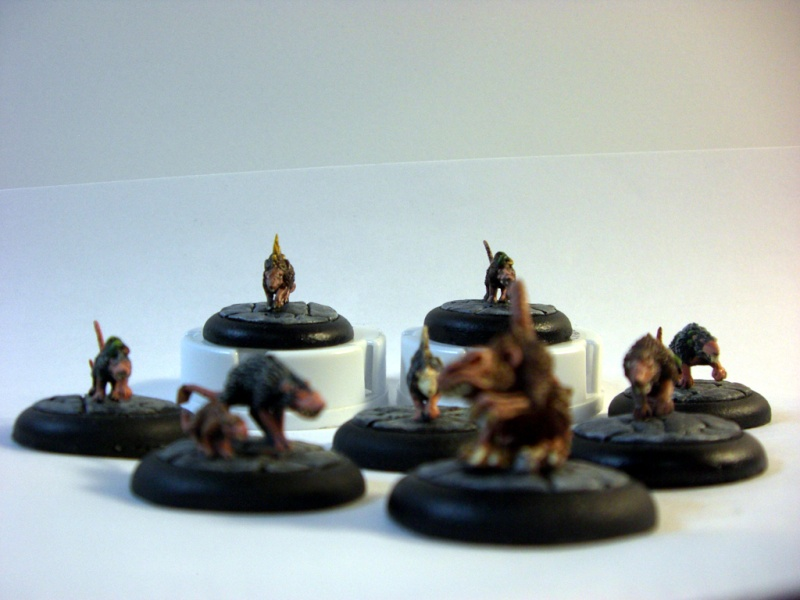 D34dB34t's Warbands (Pic Heavy) Cimg5312