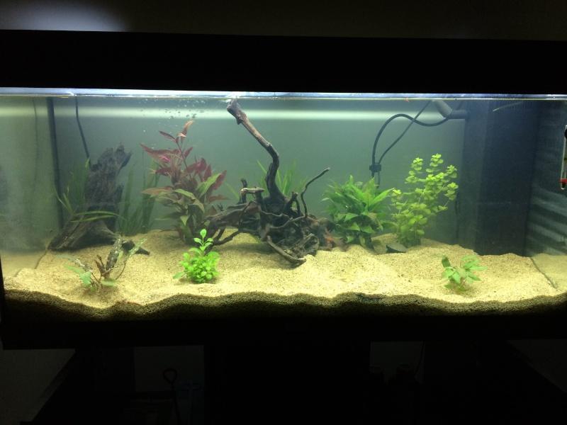 Mon 1er Aquarium : Juwel Rio 180L Img_3710