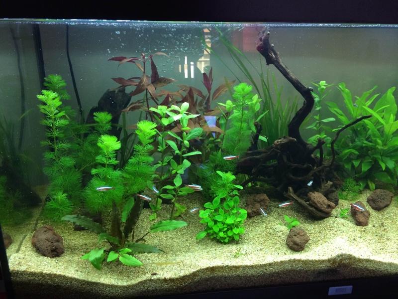 Mon 1er Aquarium : Juwel Rio 180L Img_3713