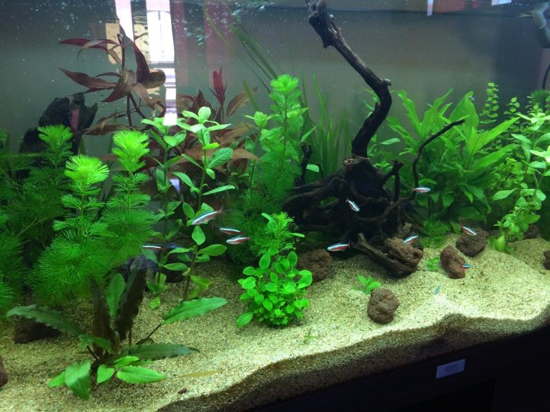 Mon 1er Aquarium : Juwel Rio 180L Img_3714