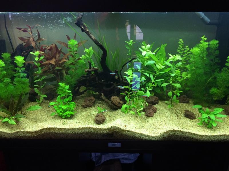 Mon 1er Aquarium : Juwel Rio 180L Img_3715