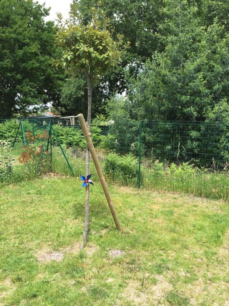 Petit jardin  Img_0414