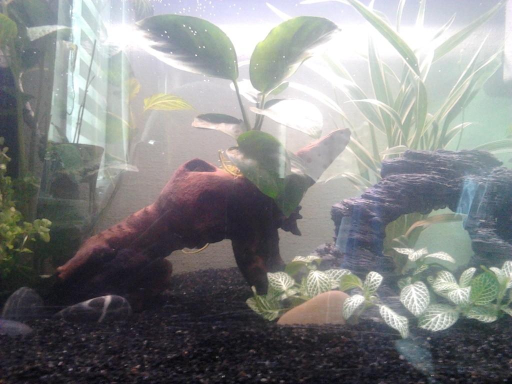 premier aquarium poisson  2015-010