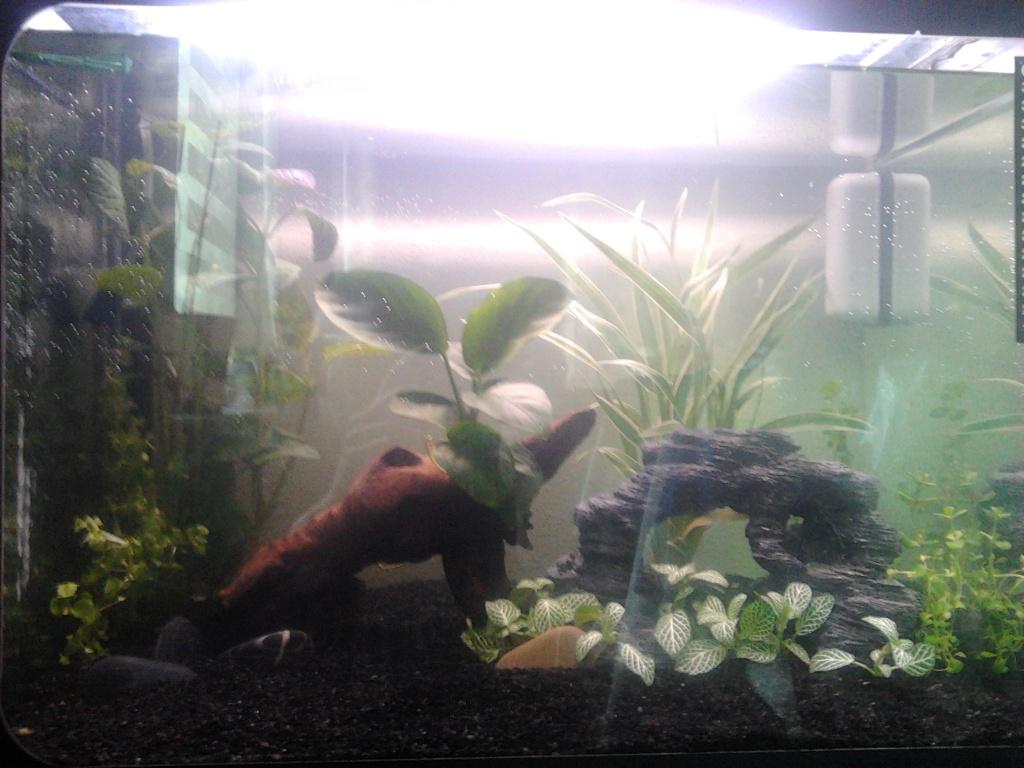 premier aquarium poisson  2015-012