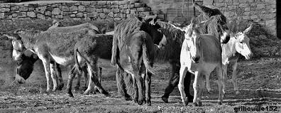 Annuaire des éleveurs d'ânes d'Equideow Imgp8211