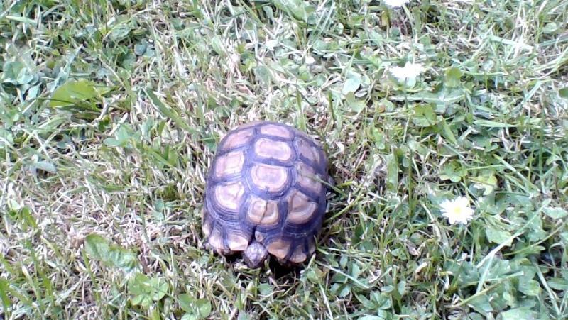 Identification de ma tortue Win_2011