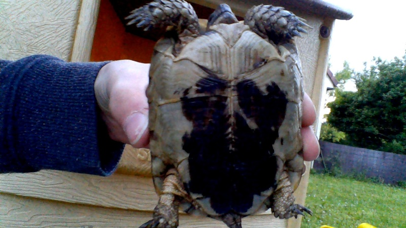 Identification de ma tortue Win_2012