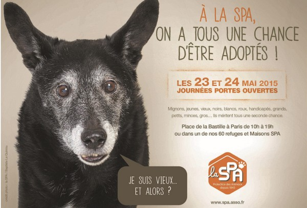 Adopter un animal : la SPA part en campagne Campag10