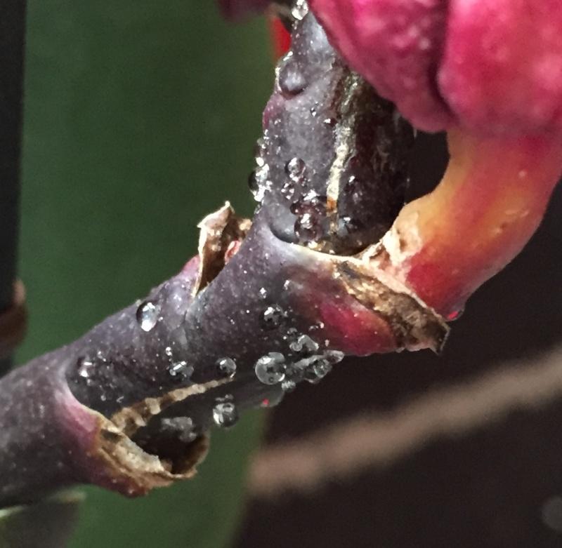 Seltsame Tropfen an den Orchideen Gross10