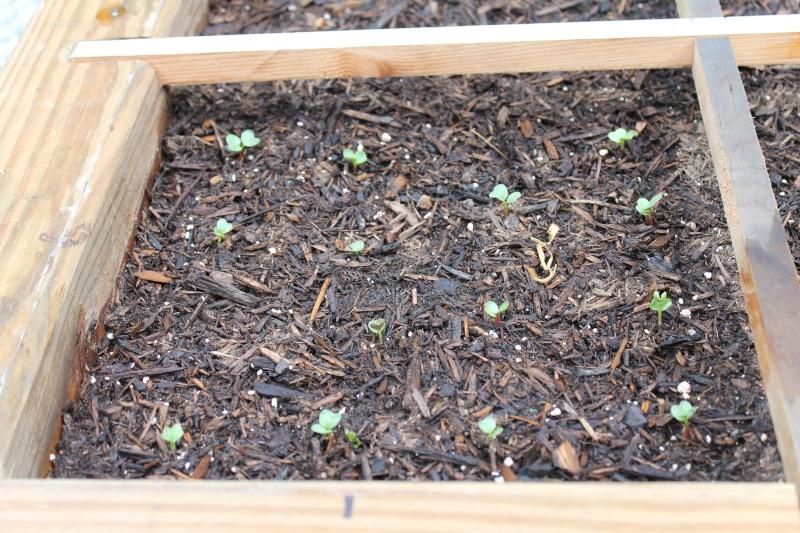 My First SFG...Work in progress - Page 2 Garden22