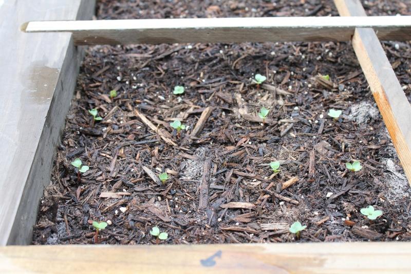 My First SFG...Work in progress - Page 2 Garden23