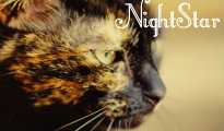 Tribal Cat Terms. Nights10