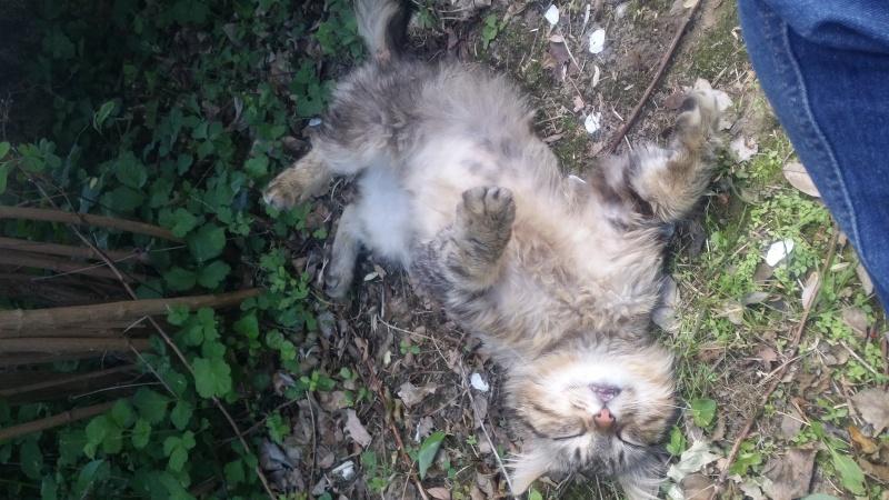 Trouver chat tigré angora beauzelle 20150527