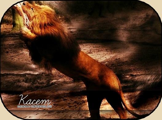 Kacem - Avoir la flemme d'avoir la flemme est mon quotidien  Kacem_14