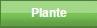 Tutankafer / Cofagrigus Plante10
