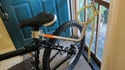 Biking with your dog Img_3710