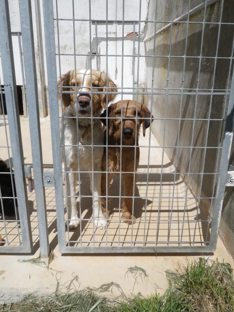 Choisir un chien à adopter en refuge - Page 2 Imgp8310