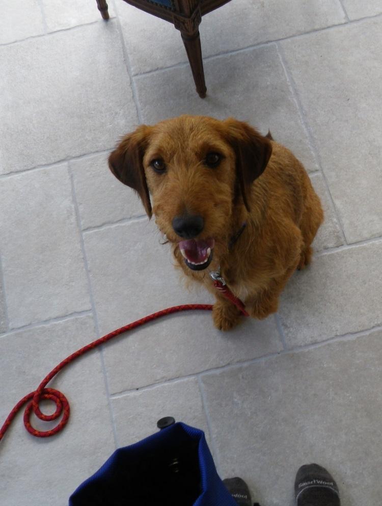 Choisir un chien à adopter en refuge - Page 2 Imgp8410