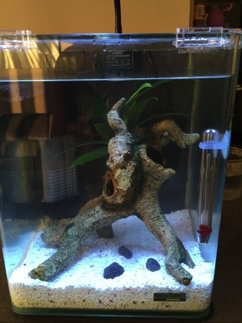 Ajout d'un filtre a mon aquarium non cyclé Untitl11