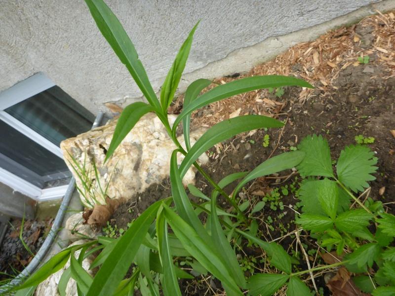 Plantes inconnues P1010512