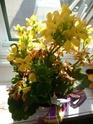 plante kalanchoe P1020611