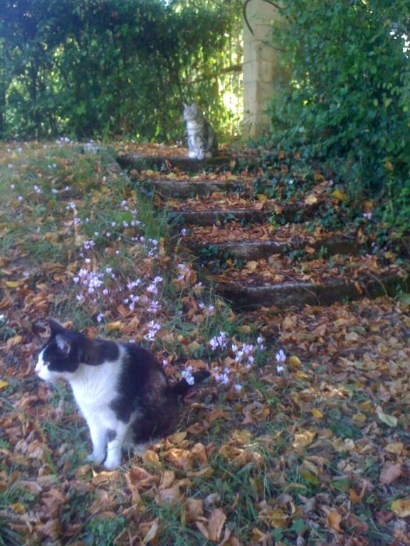 Des écrivain·e·s et des chats (avec des photos) Img_1111