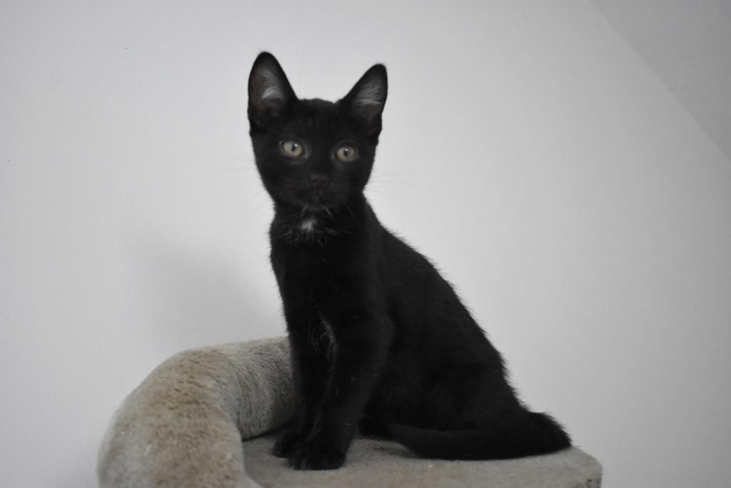 Mireille, femelle type européenne noire née le 20/06/2019 69358810