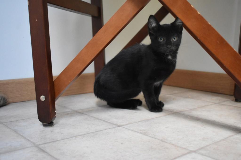 Mireille, femelle type européenne noire née le 20/06/2019 70028210