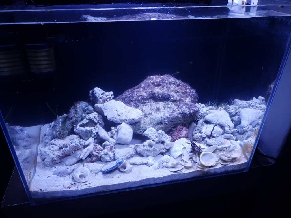 Aquarium 100 L aux Seychelles (JuBe) 20191111