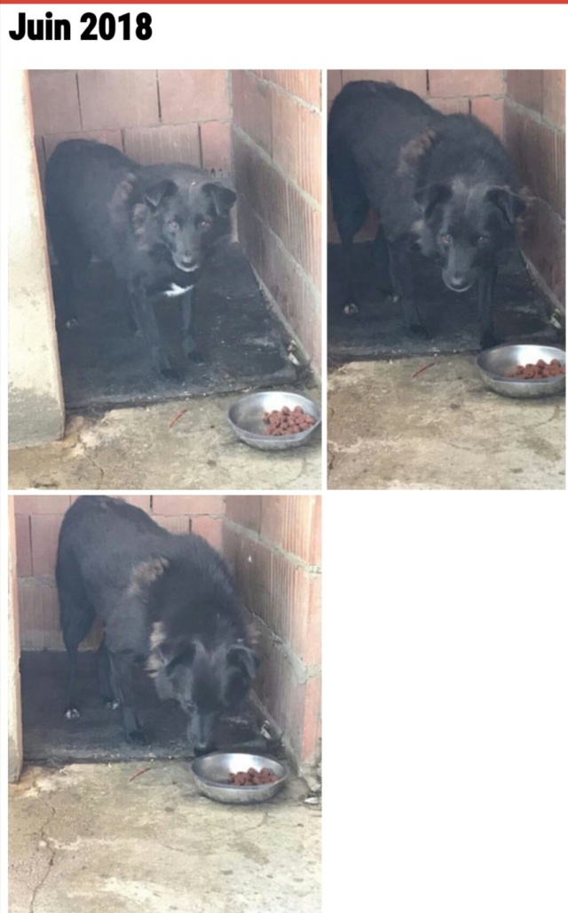 EBONY M-X 4 ans taille moyenne 15KG-FOURRIERE ORASTIE- Un chien noir timide-En pension à Timisoara - Page 6 Img_2070