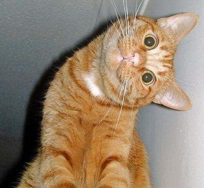 ça c'est malin Hortense + un chat qui croit aussi que ça c'est malin Hortense 26242413