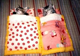Ce soir je dors... Humeur de nuit en images Chat-a10