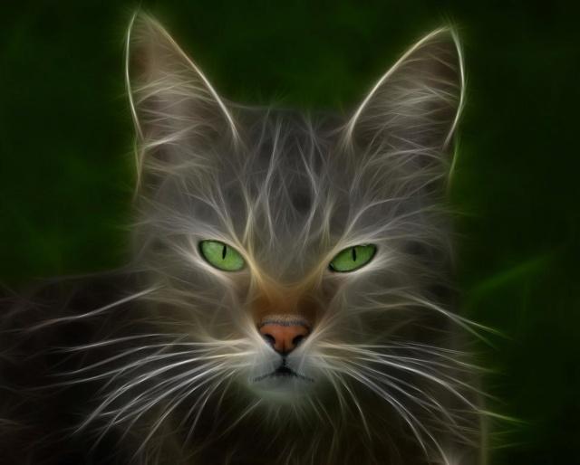 ... Qui suis-je ?!... Katzen10