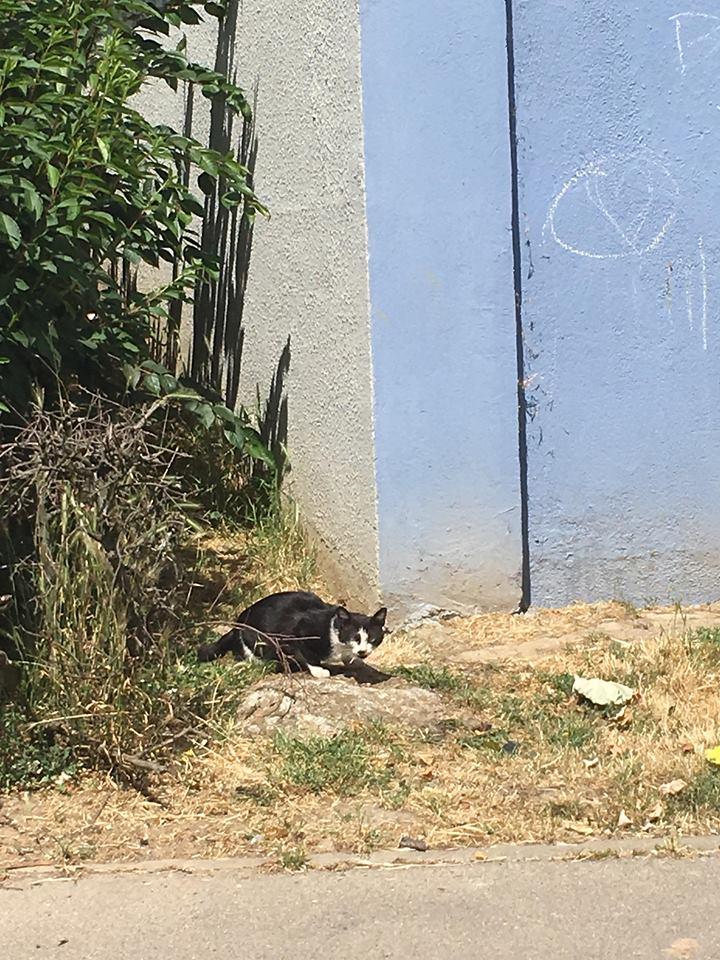 CHARLIE 3 ans ou la vraie vie misérable d'un chat des rues...  35971410