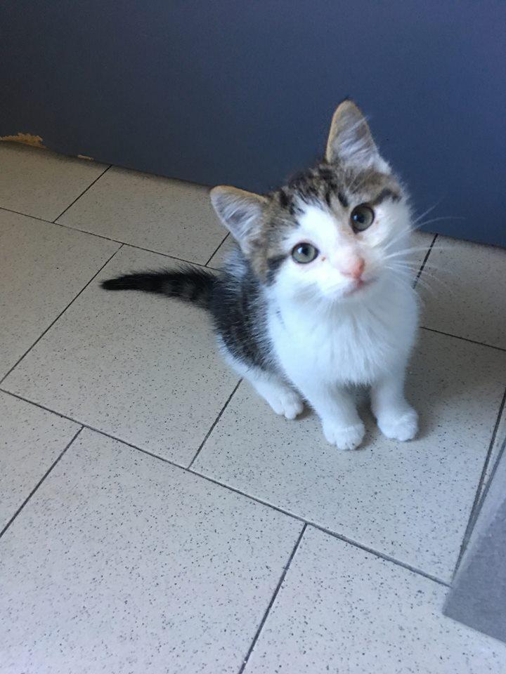 ACHILLE adorable chaton de 2 mois 1/2 44427010