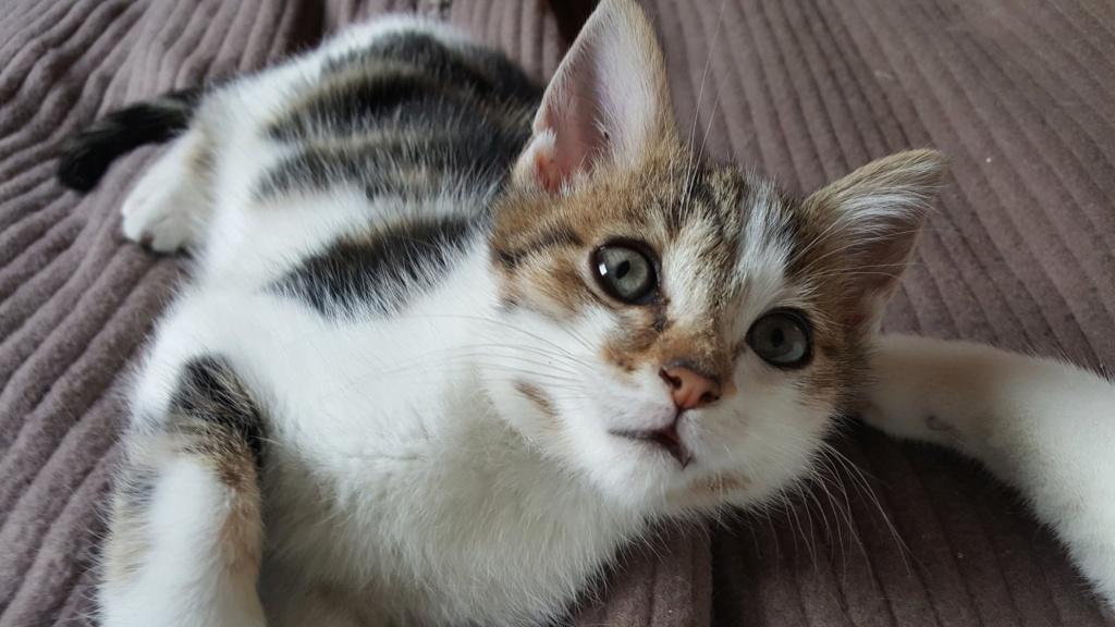 PAPYRUS adorable loulou de 1 mois et demi 44926410