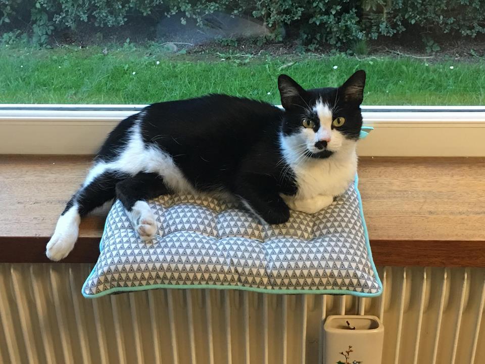 CHARLIE 3 ans ou la vraie vie misérable d'un chat des rues...  45483810