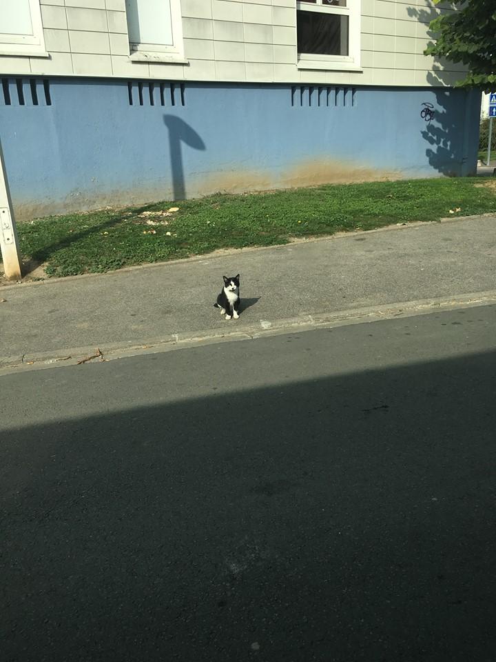 CHARLIE 3 ans ou la vraie vie misérable d'un chat des rues...  45942110