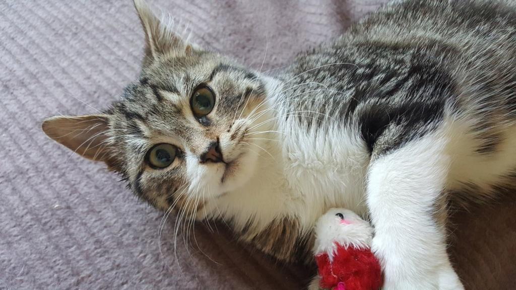 FLOCON adorable chaton de 3 mois 46390610