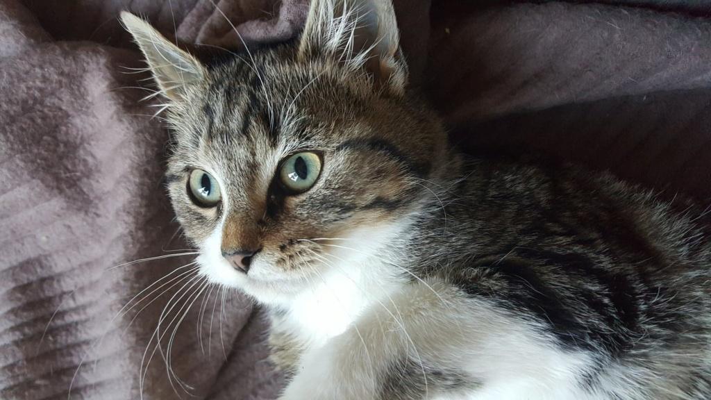 FLOCON adorable chaton de 3 mois 46485710