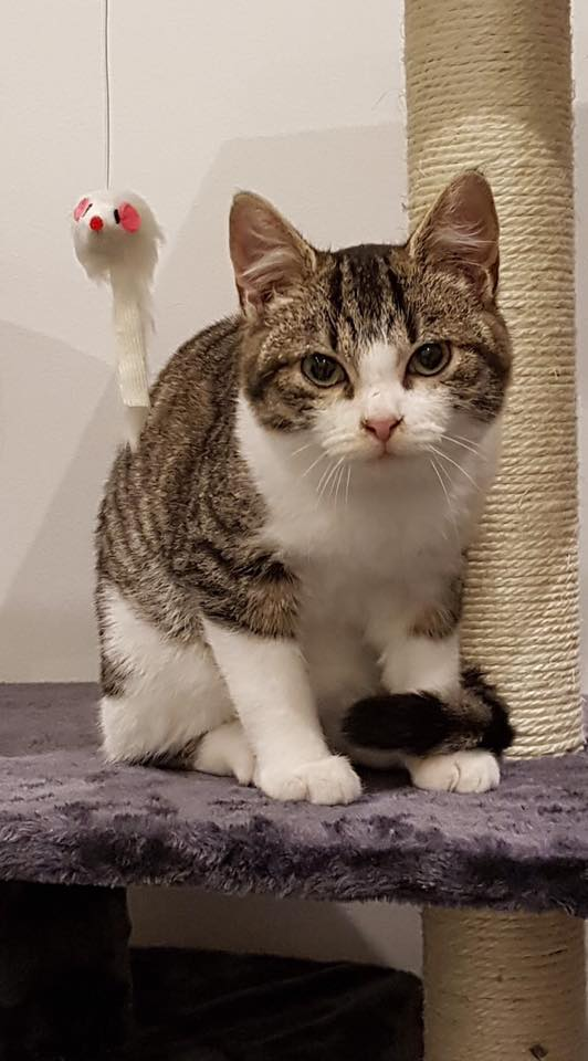 GASPARD adorable chaton des rues, 3 mois 48266910